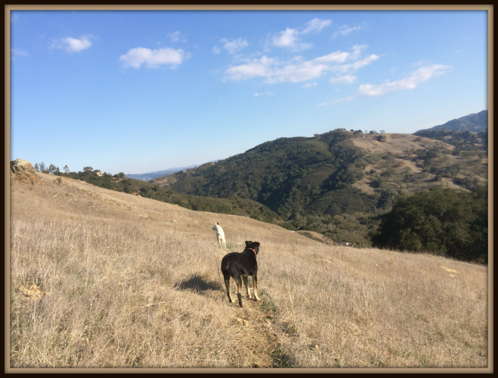 FRAME Dogs in California Coastal Range